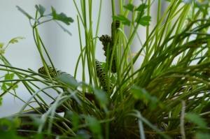 Caterpillars 3